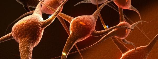 子供の脳とシナプス